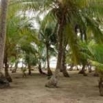 Кокос — остров кладоискателей