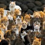 Японский остров Кошек
